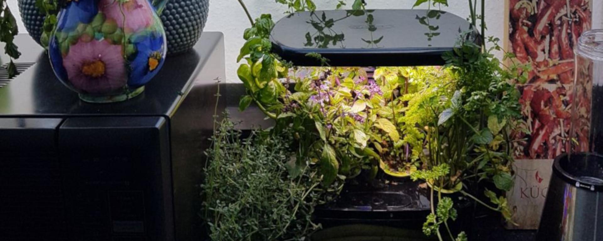 Indoor herb garden - Indoor krautergarten ...