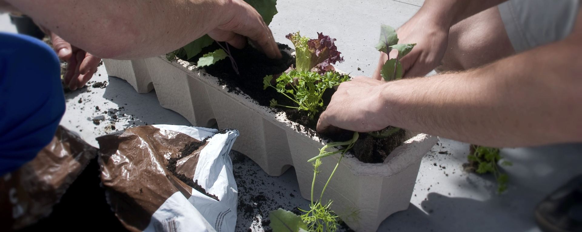 smart home garten pflanzen smart und genial einfach indoor anbauen. Black Bedroom Furniture Sets. Home Design Ideas